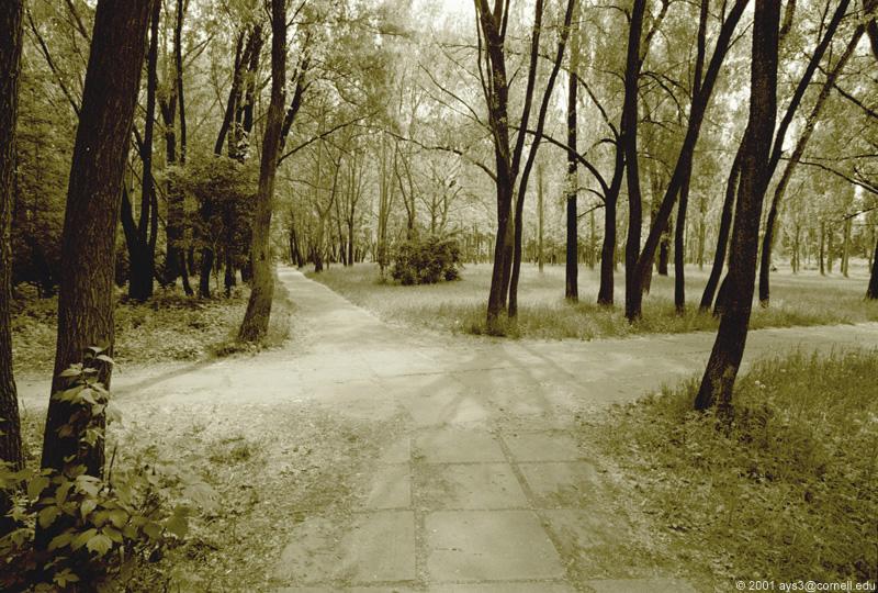 encrucijada en el bosque